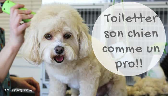 Le Toilettage animal : astuces